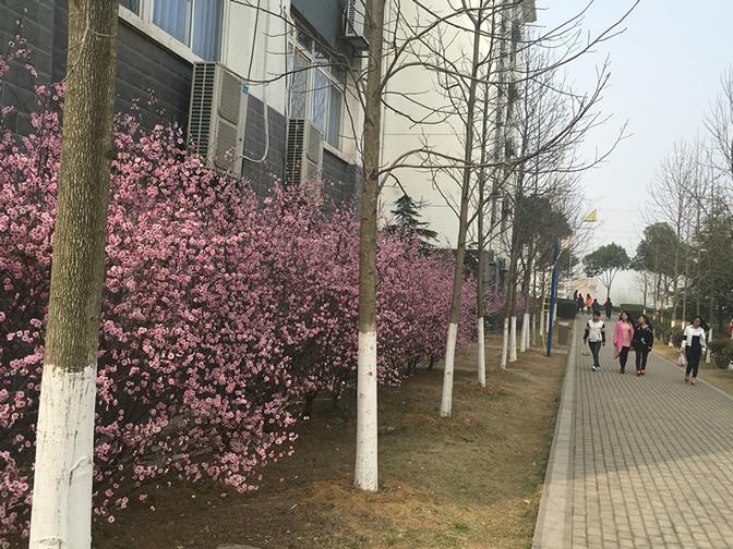 校园环境9